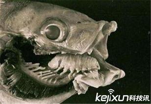 外星寄生虫入侵地球 吞噬寄主舌头控制脑部