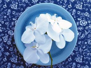 ...才是你的唯一的幸福快乐 鲜花唯美图片》由芒果唯美图片整编,如果...