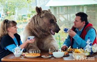 壮熊玩肌肉男-据报导,潘捷列连高夫妇刚扶养史蒂芬时,它的身体状况非常差,不过...