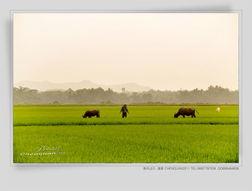 春风,掠过幸福的乡村和田野
