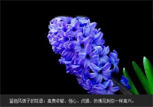给爱的人一个惊喜:蓝色妖姬玫瑰花