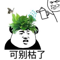 表情 绿帽撩妹表情包 绿帽撩妹微信表情包 绿帽撩妹QQ表情包 发表情 ....