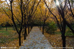 叶落苍穹-秋天落叶图片