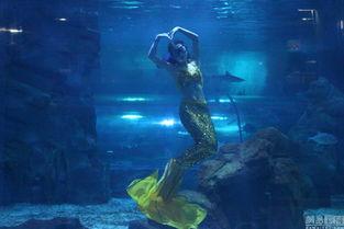 长春 美人鱼 的生活 海底 穿梭与鲨鱼共舞