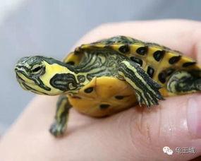 龟有哪些种类