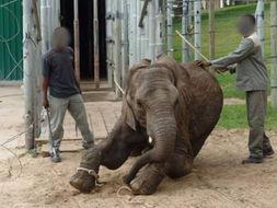 手段残忍,又是电击又是鞭打,还... 爱护动物协会(SPCA)在该园拍...