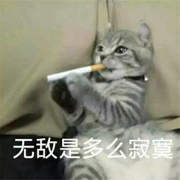 卖萌猫表情包