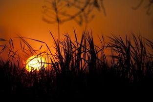 描写清晨太阳的美的诗