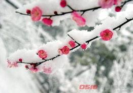 又或者如同隔岸观火般隔窗观雪,只可观望、不可把玩.   雪乍起时,...