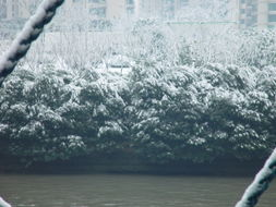 剑网三雪雪攻略