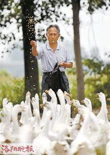 老根想丁香大喇叭曲是谁吹的-近日,一组放鹅爷爷写真走红网络引发了网友的关注,照片的主人公是...