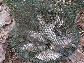 紫枯鱼人-垂钓小结:   1、在小河沟注入了大量雪水后,昼夜温差较大,连日冬...