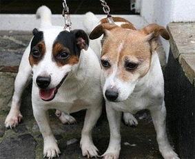 博狗bf88-狗狗是人类最好的朋友,它不仅可以时刻陪在人们身边、给人们带来快...
