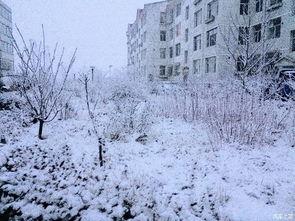 花铺千里,世界一片纯白.   洗尽铅华,潜心聆听,冬日的风景也是一...