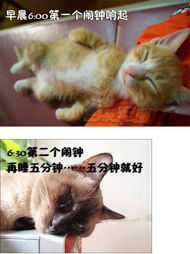 艹猫0补丁krkr2-猫咪屌丝表情演绎上班族