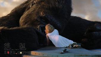 虚无缥缈打一动物-我看 金刚 虚无飘渺的爱情
