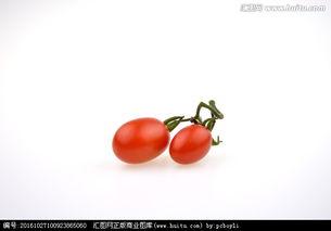 红蕃茄hk16-青 红西红柿
