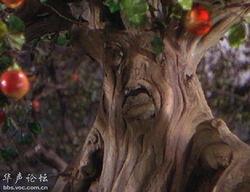 世界上最恐怖的大树们