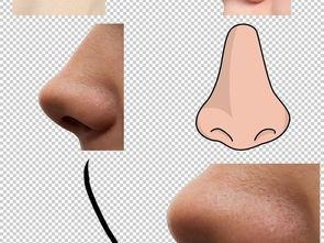 各种鼻子免抠png透明图层素材图片下载png素材 其他