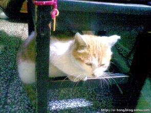 谜男方法猫绳-这样倒也相安无事,但奇怪的是,一个星期后,小猫不见了.周日还看...