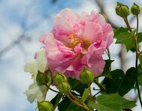 途中,仍念念不忘佛院之清幽.在一杯茶中远离尘世,明黄的汤色,花...