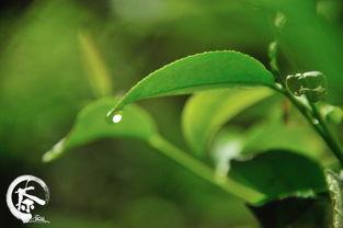 对中国茶文化的悟道与升华,从而形成了以茶礼、茶道、茶艺为特色的...