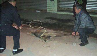 猴三棍女房管兔兔照片-华西都市报   :一只黑狗在短短1个小时内,咬伤了简阳市涌泉镇16名...