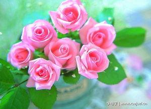 描写花的诗句
